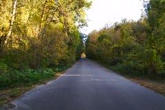 Estrada asfaltada na floresta com árvores fotos de stock