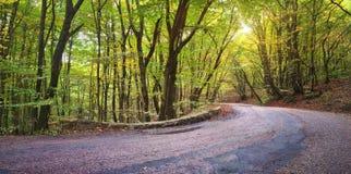 Estrada asfaltada na floresta do outono Imagens de Stock Royalty Free