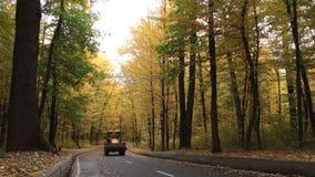 Estrada asfaltada na floresta do outono, com as árvores amarelas e verdes vídeos de arquivo