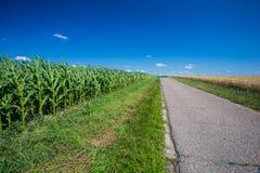 Estrada asfaltada perto dos campos imagem de stock