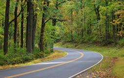 Estrada através da floresta Foto de Stock Royalty Free