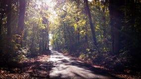 Estrada através da floresta fotografia de stock royalty free