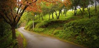 Estrada através da floresta Imagens de Stock Royalty Free