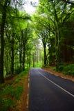 Estrada através da floresta imagem de stock royalty free