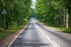 Estrada através da floresta Foto de Stock