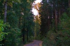 A estrada através da floresta Fotos de Stock