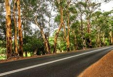 A estrada através da floresta fotografia de stock