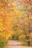 Estrada através da floresta brilhante do outono Foto de Stock
