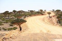 A estrada através da floresta da árvore de dragão imagem de stock royalty free