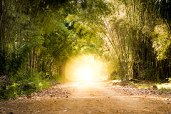 Estrada através da floresta de bambu e da extremidade clara a extremidade do túnel Imagens de Stock