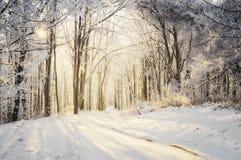 Estrada através da floresta do inverno no nascer do sol Fotografia de Stock Royalty Free