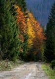 A estrada através da floresta do outono Foto de Stock Royalty Free