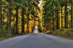 Estrada através da floresta do outono Imagem de Stock