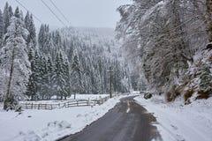 Estrada através da floresta do pinho Imagens de Stock Royalty Free