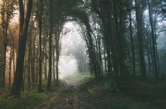 Estrada através da floresta encantado com névoa misteriosa Fotos de Stock