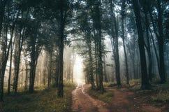 Estrada através da floresta mágica encantado Fotos de Stock