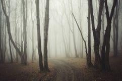 Estrada através da floresta misteriosa assustador com névoa em Dia das Bruxas Foto de Stock Royalty Free