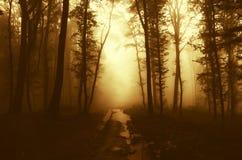 Estrada através da floresta misteriosa com névoa no por do sol Fotos de Stock