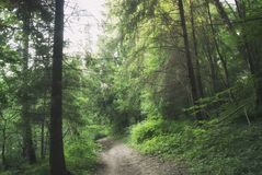 A estrada através da floresta misteriosa do russo Fotografia de Stock