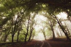 Estrada através da floresta nevoenta encantado Fotografia de Stock
