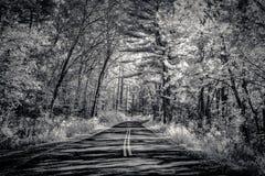 Estrada através da floresta no parque estadual de um estado a outro no americano Imagem de Stock