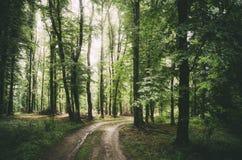 Estrada através da floresta verde no verão Imagem de Stock Royalty Free