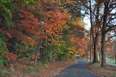 Estrada através da folhagem de outono Imagens de Stock