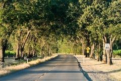 Estrada através das árvores Imagens de Stock