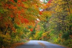 Estrada através das árvores do outono Fotos de Stock Royalty Free