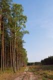 Estrada através das madeiras Foto de Stock Royalty Free