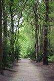 Estrada através das madeiras Foto de Stock