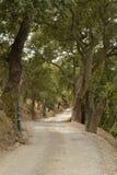 Estrada através das madeiras fotografia de stock royalty free