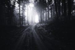 Estrada através das madeiras misteriosas escuras Fotos de Stock Royalty Free