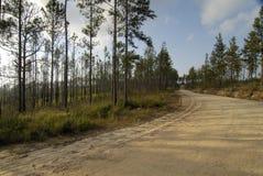 Estrada através de Belize Foto de Stock Royalty Free