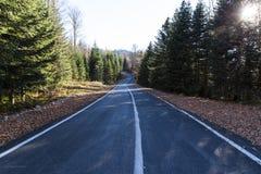 Estrada através de Forest Through Autumn Landscape fotografia de stock royalty free
