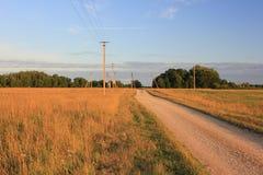 Estrada através de um campo wheaten amarelo Fotografia de Stock Royalty Free