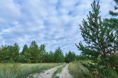 Estrada através de uma floresta Imagem de Stock Royalty Free