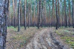 Estrada através de uma floresta Imagens de Stock Royalty Free