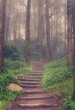 Estrada através de uma floresta fotos de stock