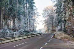 Estrada através de uma floresta com árvores geadas Fotografia de Stock