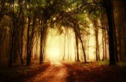 Estrada através de uma floresta dourada no outono imagens de stock