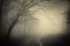 Estrada através de uma floresta escura Foto de Stock