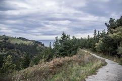 Estrada através do arbusto Foto de Stock Royalty Free