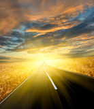 Estrada através do campo de trigo Imagens de Stock Royalty Free