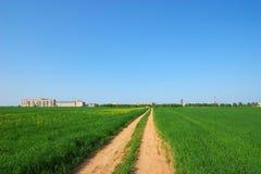 Estrada através do campo verde Imagens de Stock Royalty Free