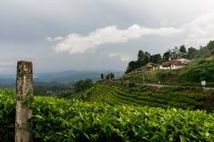 Estrada através do jardim de chá Foto de Stock Royalty Free