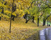 Estrada através do parque na manhã chuvosa Fundo, natureza imagem de stock