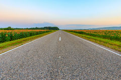 A estrada através dos campos Imagem de Stock