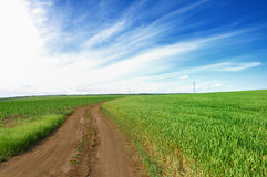 Estrada através dos campos de trigo Imagens de Stock