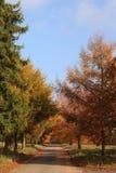 Estrada através das árvores do outono Fotografia de Stock Royalty Free